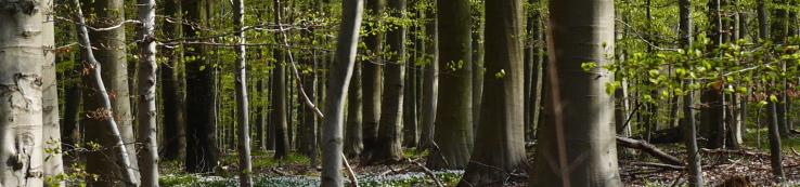 Skov tidlig forår 034_738x173_2